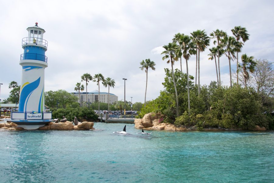 9 Years Ago Today Manta Opens at SeaWorld